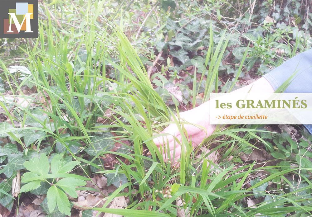 La cueillette des graminées