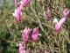 fleurs-printemps2